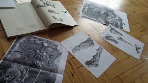 An image of anatomy books