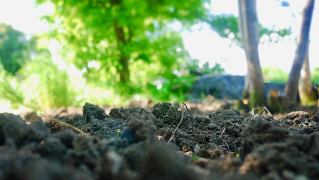 Photo of soil, earth and tree